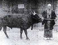 南部牛の古い写真.jpg